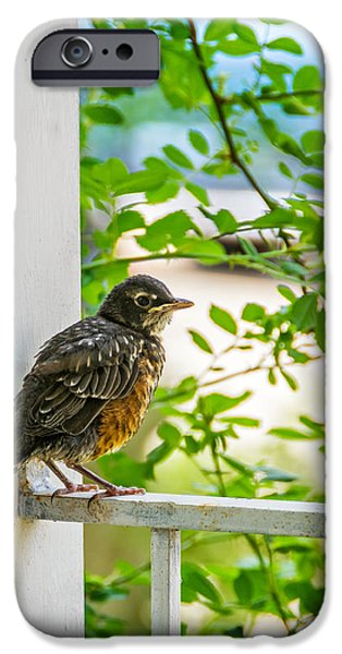 Baby Bird iPhone Cases - Baby Robin - Fresh From the Nest iPhone Case by Steve Harrington