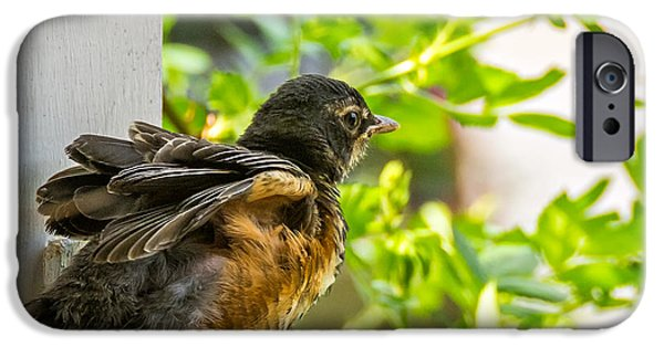 Baby Bird iPhone Cases - Baby Robin - Revving Up  iPhone Case by Steve Harrington