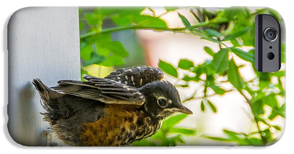 Baby Bird iPhone Cases - Baby Robin - Testing Testing 1 2 3 iPhone Case by Steve Harrington