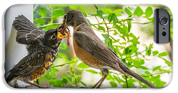Baby Bird iPhone Cases - Baby Robin - Yummy iPhone Case by Steve Harrington