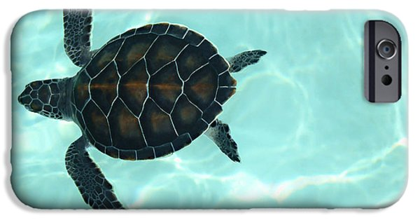 Baby Photographs iPhone Cases - Baby Sea Turtle iPhone Case by Ellen Henneke