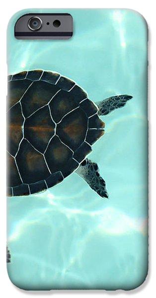 Baby Sea Turtle iPhone Case by Ellen Henneke