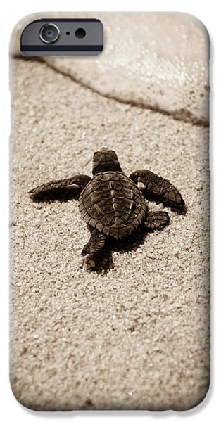 Escape iPhone Cases - Baby Sea Turtle iPhone Case by Sebastian Musial