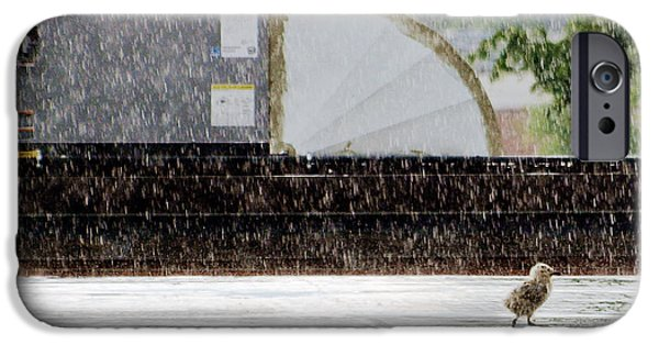 Rooftop iPhone Cases - Baby Seagull Running in the rain iPhone Case by Bob Orsillo