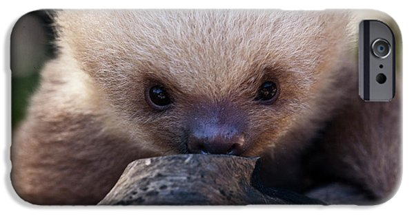 Sloth iPhone Cases - Baby Sloth 2 iPhone Case by Heiko Koehrer-Wagner