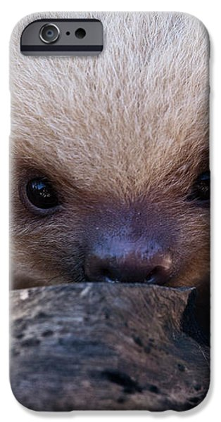 Baby Sloth 2 iPhone Case by Heiko Koehrer-Wagner