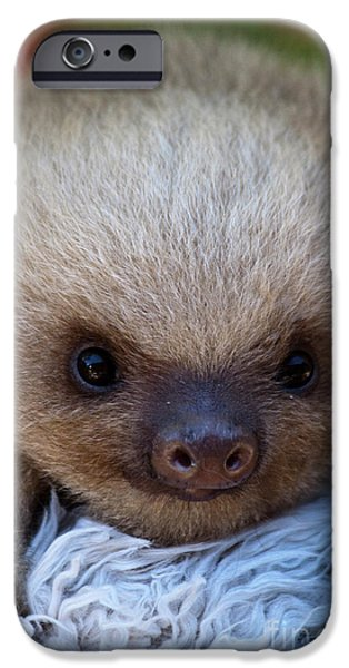 Biologic iPhone Cases - Baby Sloth iPhone Case by Heiko Koehrer-Wagner