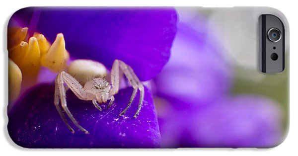 Animals iPhone Cases - Baby Spider Macro iPhone Case by Andres Leon