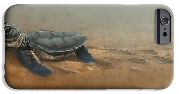 Ocean iPhone Cases - Baby Turtle iPhone Case by Aaron Blaise