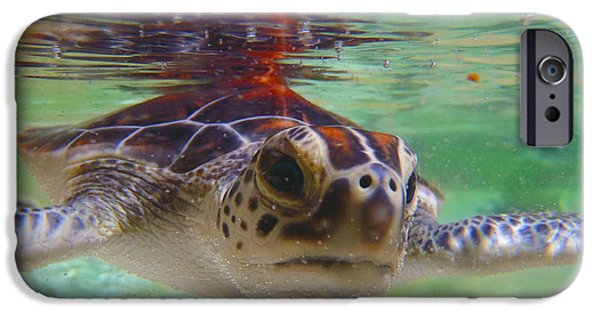 Iguana iPhone Cases - Baby turtle iPhone Case by Carey Chen