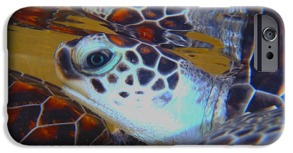 Reptiles Photographs iPhone Cases - Baby Turtles iPhone Case by Carey Chen