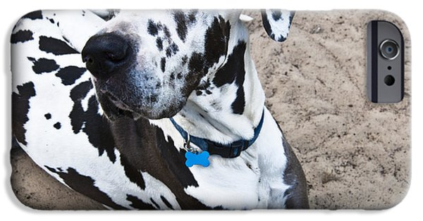 Great Dane iPhone Cases - Bacchus The Great Dane iPhone Case by Sharon Cummings