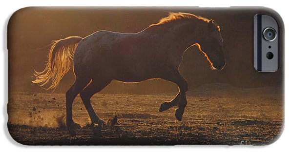 American Quarter Horse iPhone Cases - Back Light iPhone Case by Stephanie Laird