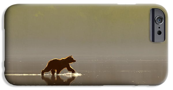 Bears iPhone Cases - Back Lit Grizzly iPhone Case by Aaron Blaise