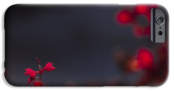 Bokeh iPhone Cases - Backlight iPhone Case by Chad Dutson