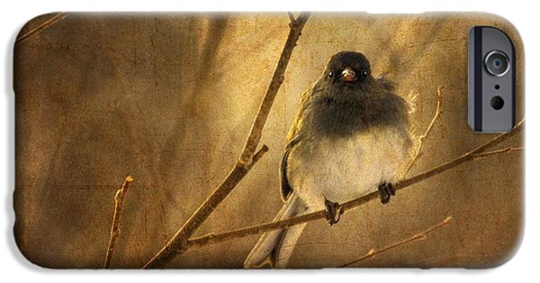 Wild Digital Art iPhone Cases - Backlit Birdie Being Buffeted  iPhone Case by Lois Bryan