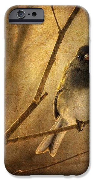 Backlit Birdie Being Buffeted  iPhone Case by Lois Bryan