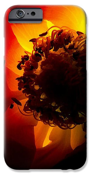 Backlit flower iPhone Case by Fabrizio Troiani