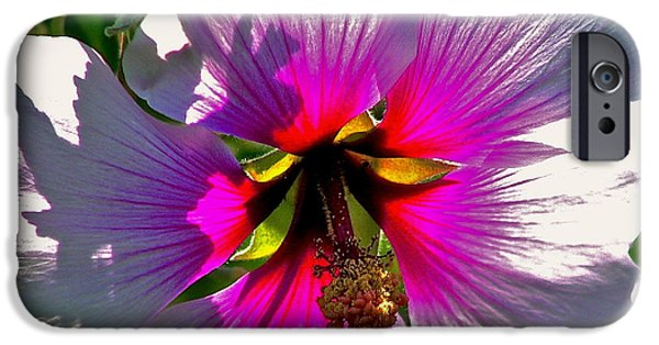 Fauna Pyrography iPhone Cases - Backlit Hibiscus iPhone Case by DUG Harpster