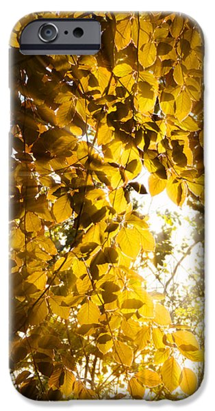 Interior Scene iPhone Cases - Backlit Leaves iPhone Case by Wim Lanclus