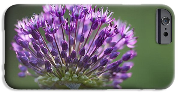 Allium Hollandicum iPhone Cases - Backlit Sensation iPhone Case by Anne Gilbert