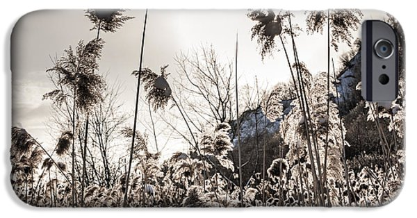 Snowy iPhone Cases - Backlit winter reeds iPhone Case by Elena Elisseeva