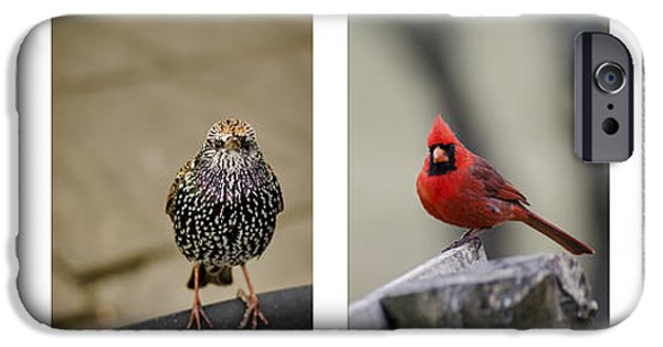 Animals Photographs iPhone Cases - Backyard Bird Set iPhone Case by Heather Applegate