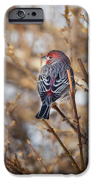 Finch iPhone Cases - Backyard Birds House Finch iPhone Case by Bill  Wakeley