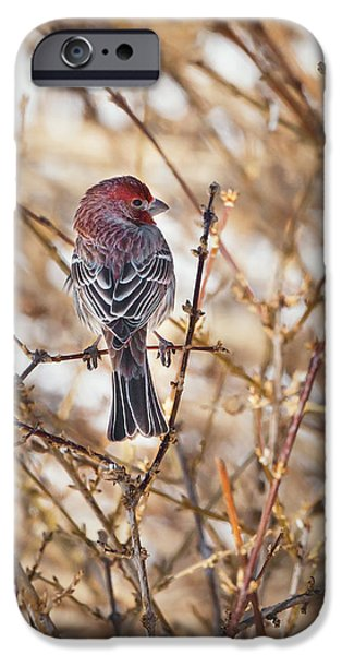 Finch iPhone Cases - Backyard Birds Male House Finch iPhone Case by Bill  Wakeley