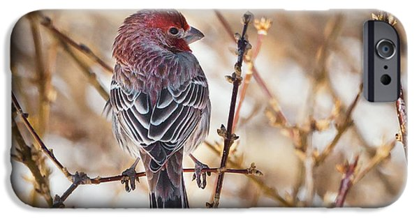 Finch iPhone Cases - Backyard Birds Male House Finch Square iPhone Case by Bill  Wakeley