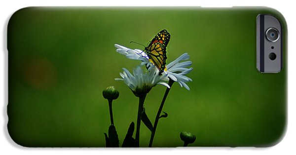Daisy Bud iPhone Cases - Backyard Magic iPhone Case by Robert Geary