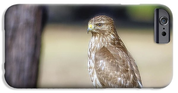 Hawk Art Print iPhone Cases - Backyard Villain iPhone Case by Phill  Doherty