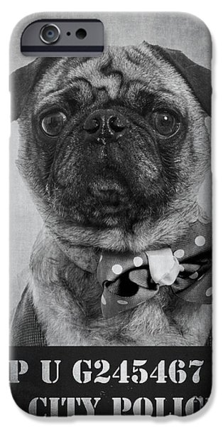 Police Dog iPhone Cases - Bad Dog iPhone Case by Edward Fielding