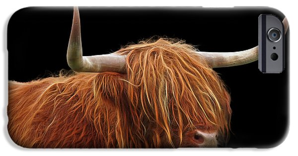 Moo Moo iPhone Cases - Bad Hair Day - Highland Cow - On Black iPhone Case by Gill Billington