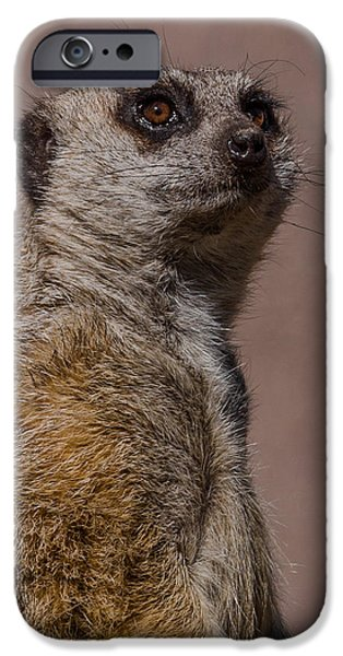 Meerkat iPhone Cases - Bad Whisker Day iPhone Case by Ernie Echols