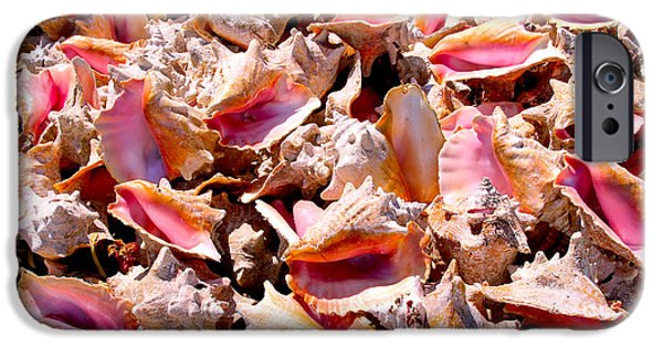Carey Chen iPhone Cases - Bahama Conch iPhone Case by Carey Chen