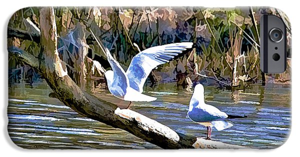 Flying Seagull iPhone Cases - Balance act P- iPhone Case by Leif Sohlman