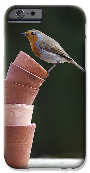 Flowerpot iPhone Cases - Its a Balancing Act iPhone Case by Tim Gainey