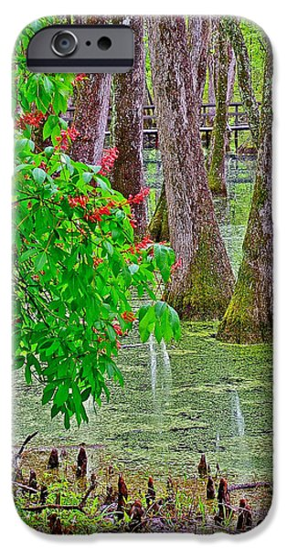 Natchez Trace Parkway iPhone Cases - Bald Cypress and Red Buckeye Tree at Mile 122 of Natchez Trace Parkway-Mississippi iPhone Case by Ruth Hager