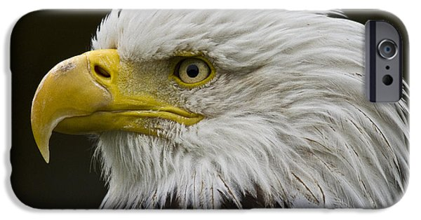 Norway iPhone Cases - Bald Eagle - 7 iPhone Case by Heiko Koehrer-Wagner