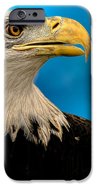 Bald Eagle and Fledgling  iPhone Case by Bob Orsillo