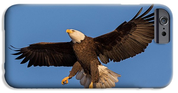 Eagle Photographs iPhone Cases - Bald Eagle Christmas Morning iPhone Case by Everet Regal