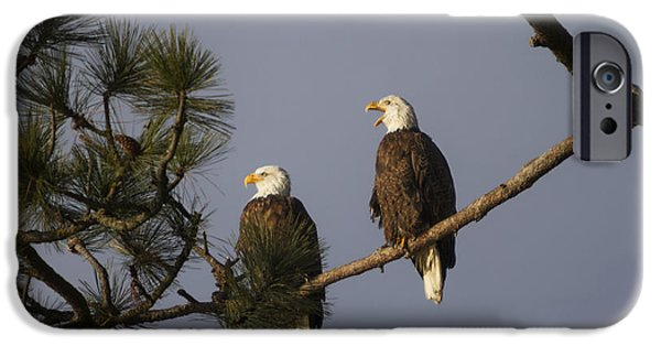 Hunting Bird iPhone Cases - Bald Eagle Couple iPhone Case by Mark Kiver