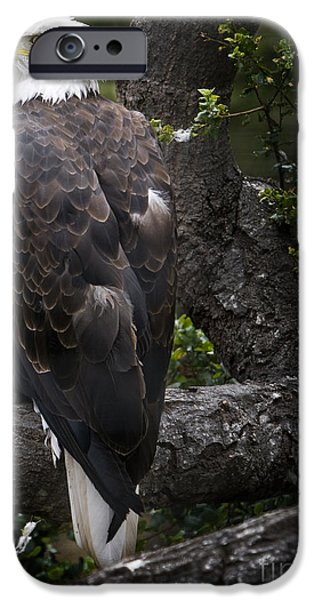 David iPhone Cases - Bald Eagle iPhone Case by David Millenheft