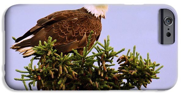 Predator Pyrography iPhone Cases - Bald Eagle iPhone Case by Debra  Miller
