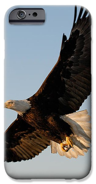 Bald Eagle Flying with Fish in its Talons iPhone Case by Stephen J Krasemann