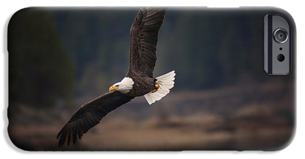 Hunting Bird iPhone Cases - Bald Eagle in Flight iPhone Case by Mark Kiver