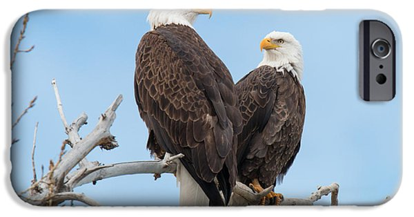 Matting iPhone Cases - Bald Eagle Mates Form a Heart iPhone Case by Tony Hake
