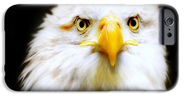 Fauna iPhone Cases - Bald Eagle iPhone Case by Photodream Art