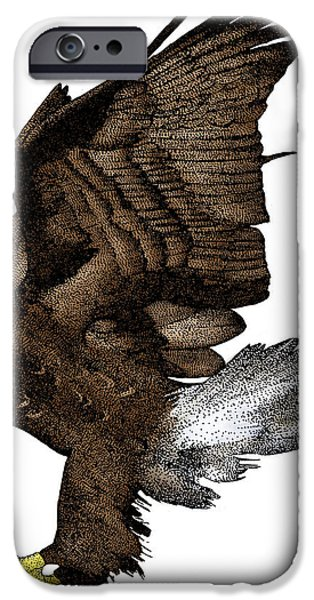 Drawing Of Eagle iPhone Cases - Bald Eagle iPhone Case by Roger Hall